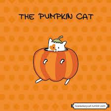 liza is a lazy cat u2022 please help me decide my halloween costume