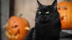 cat halloween picture what are some good halloween cat names reference com