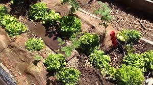 tips and tricks for april in the vegetable garden youtube