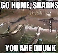 Funny Shark Meme - funny go home shark you are drunk meme bajiroo com