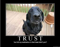 Black Lab Meme - 39 best all about labs images on pinterest pets doggies and labradors