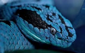 a green snake wallpapers photo collection green snake close up