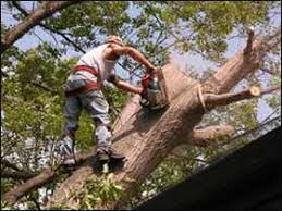 tree cutting houston tx tree removal stump treescut service