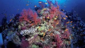 Live Rock Aquascaping Reef Tank Aquascaping Ideas Animals Mom Me
