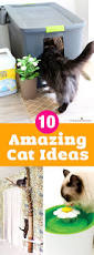 10 amazing ways to spoil your cat fun cat toys
