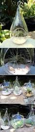 garden display ideas air plants succulents different display ideas garden