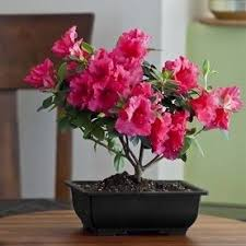 best plants for bedroom what are the 3 best indoor plants for my bedroom delhi resident