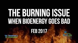 Bad Energy by The Burning Issue When Bioenergy Goes Bad Birdlife