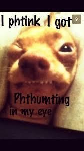 Tuna The Dog Meme - 44 best funny dog memes images on pinterest funny dog memes funny