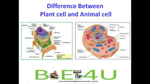 5 major differences between animal cell and plant cell youtube