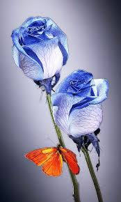 imagenes con flores azules dia de la maestra beautiful blue roses roses pinterest cobalto mariposas y azul