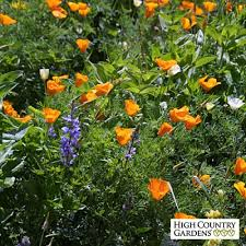 deer resistant wildflower seed mix high country gardens