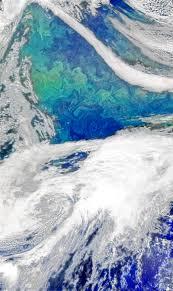 Bloom Phytoplankton Bloom In The North Atlantic Nasa
