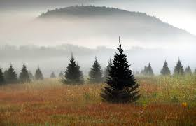your christmas tree is going to cost more green star 102 5