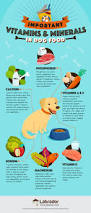 best dog foods our complete guide for 2017 lthq