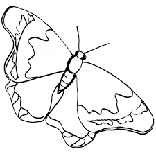 printable pieridae butterfly coloring page for girls
