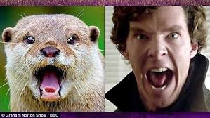Cumberbatch Otter Meme - benedict cumberbatch imitates otter on graham norton show otters