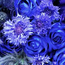 purple and blue flowers shop for wholesale flowers by color