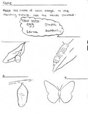 crawling to flying the life cycle of a butterfly wikieducator