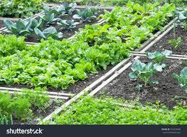 vegetable garden for small spaces garden designs for small spaces archives seg2011 com