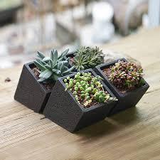 concrete hanging planter with a plant by dingading terrariums