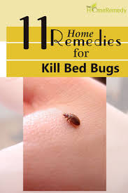 Kill Bed Bugs 11 Home Remedies To Kill Bed Bugs Natural Treatments U0026 Cure For