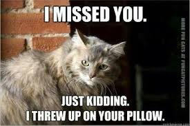 funny welcome welcome home human fun cat pictures