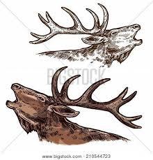 moose images illustrations vectors moose stock photos u0026 images