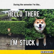 Funny Doge Memes - someone help me please the meta picture