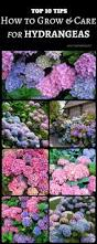 Hereford Patio Centre by Best 20 Garden Shrubs Ideas On Pinterest Potted Plants Shrubs