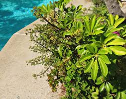 ornament poolside plants that look like paradise stunning