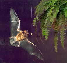 free halloween background sounds cut bats some slack build them a home for halloween wsu news