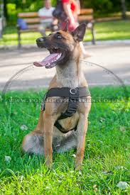 belgian shepherd uk belgium shepherd dog harness for training weight pulling h17