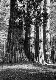 our national parks by john muir 1901 c 1901 john muir