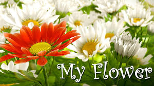 Flower Pictures My Flower 3d Live Wallpaper 1 08 Apk Download Android