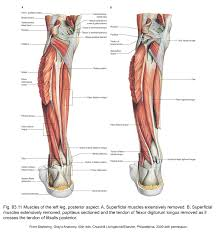 Foot Surface Anatomy Applied Anatomy Of The Lower Leg Ankle And Foot