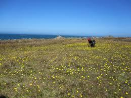 non native plants in california california u0027s coastal prairies prairie described