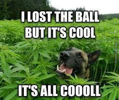 Weed Memes - weed memes best collection of funny weed pictures