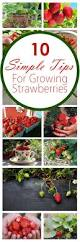 14 best strawberries images on pinterest desserts sweet recipes