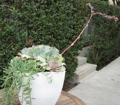 diy outdoor planter tough beauties that won u0027t die even if you