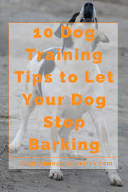 how to train dog to stop barking 10 dog training tips to let your dog stop barking dog barking