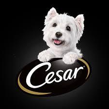 cesar cuisine cesar canine cuisine home