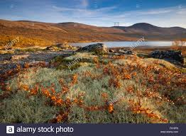 Autumn Colors Autumn Colors And Last Light At Dovrefjell Dovre Kommune Oppland