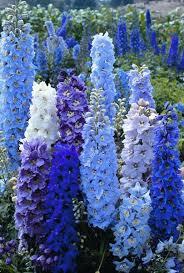 delphinium flowers 10 cheap but creative ideas for your garden 5 delphiniums