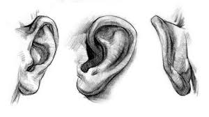 how to draw ears u2013 anatomy and structure proko