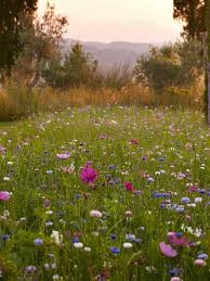 best 25 wild flower meadow ideas on pinterest meadow garden