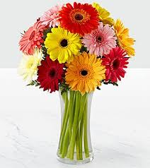 gerbera daisies world gerbera bouquet 12 stems vase included