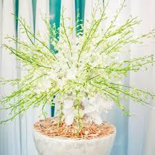 Flower San Jose - flower decor 62 photos u0026 31 reviews florists 608 oldham rd