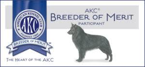 belgian sheepdog oregon blackforest belgian sheepdogs groenendael u2013 we breed family dogs
