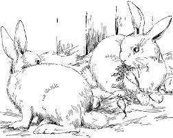 realistic animal coloring pages forest animals coloring pages getcoloringpages com